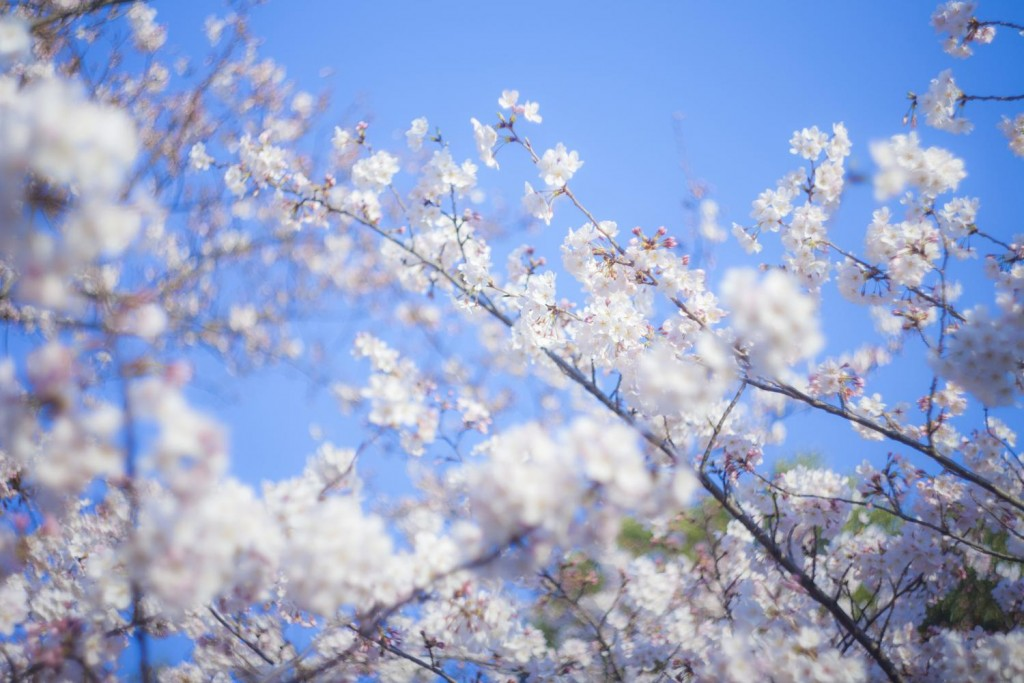 -shared-img-thumb-TSU87_shinseikatu_TP_V